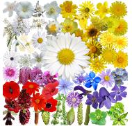 best plant identification apps