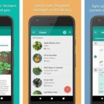 Top 10 best plant identification apps (android/iphone) 2019