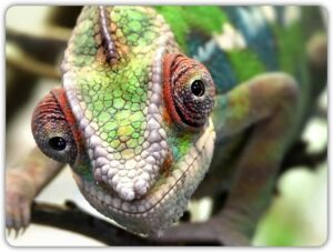 Best Carpet Chameleon 2020